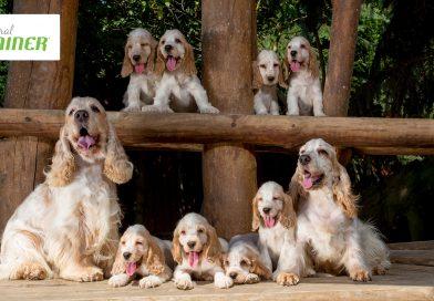 Crocchette per cani Trainer: sapore e bontà per ogni taglia ed età